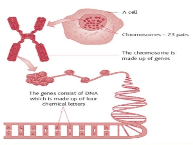   Cytochrome P450 Enzymes:      UDP-Glucuronosyl Transferase:     CYP 2D6 CYP 2C19  UGT 1A1  TPMT = Thiopurine S-Met...