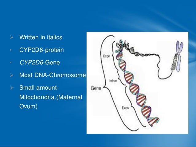 DNA  Transcribed  Complementary mRNA Translated in Rough Endoplasmic reticulum  Protein product  Post translational modifi...