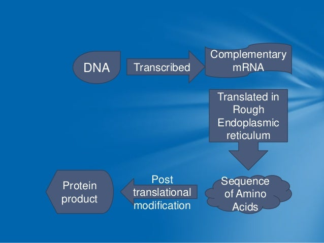  Rate of transcription Promoter region   RNA polymerase binds to initiate transcription