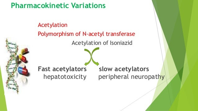 Pharmacokinetic Variations Acetylation Polymorphism of N-acetyl transferase Acetylation of Isoniazid Fast acetylators slow...