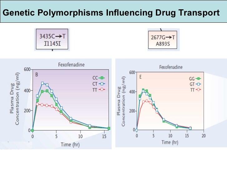 Genetic Polymorphisms Influencing Drug Transport