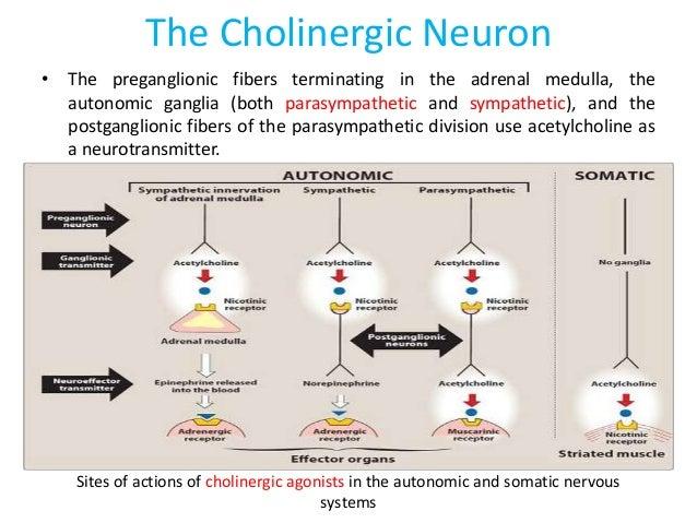 Pharmacology cholinerg...