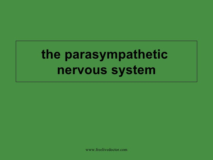 the parasympathetic  nervous system www.freelivedoctor.com