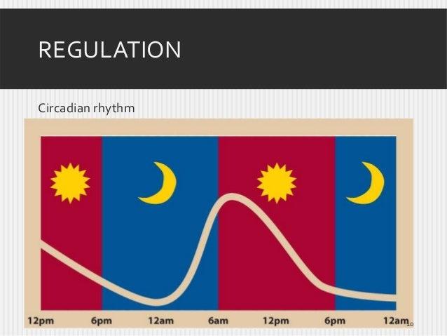 REGULATION Circadian rhythm  10