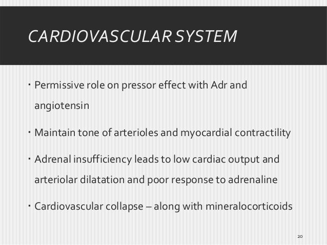 CARDIOVASCULAR SYSTEM  Permissive role on pressor effect with Adr and angiotensin  Maintain tone of arterioles and myoca...