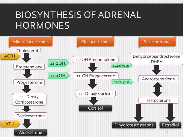 BIOSYNTHESIS OF ADRENAL HORMONES Mineralocorticoids  Glucocorticoids  Sex Hormones  11-OH Pregnenolone  Dehydroepiandroste...