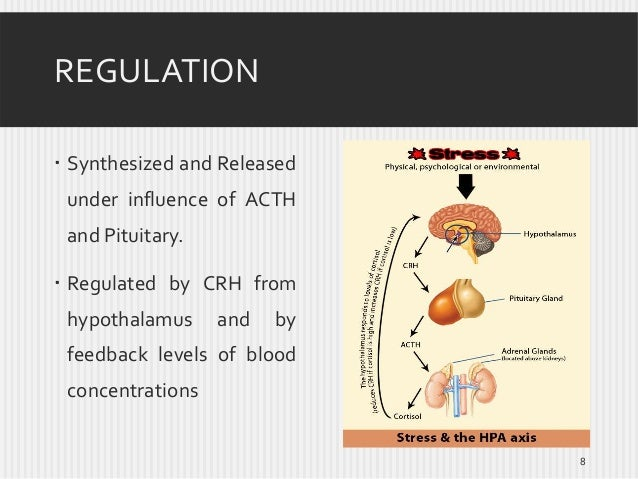 REGULATION  Synthesized and Released under influence of ACTH and Pituitary.   Regulated by CRH from hypothalamus  and  b...