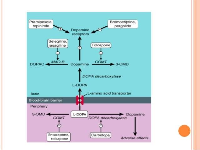 Pharmacology of dopamine | 638 x 479 jpeg 44kB