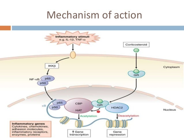 steroid inhaler mechanism of action