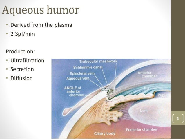 Aqueous humor • Derived from the plasma • 2.3µl/min Production: • Ultrafiltration • Secretion • Diffusion 6