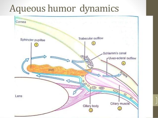 Aqueous humor dynamics 7