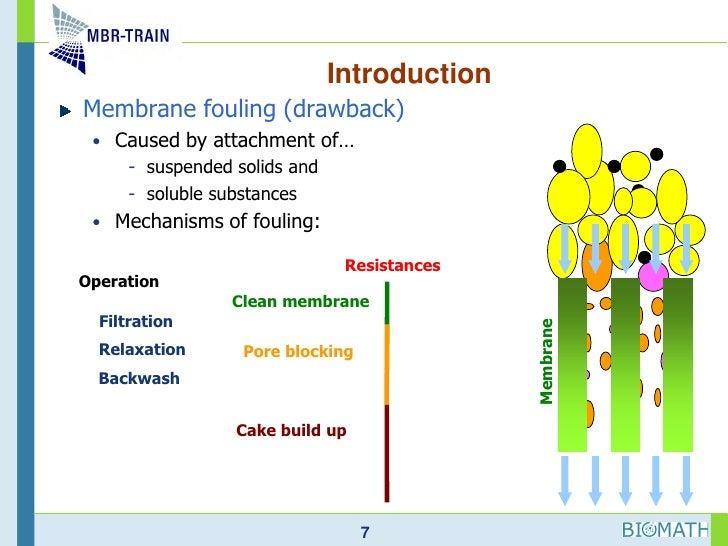 Understanding Hydrodynamics In Membrane Bioreactor Systems