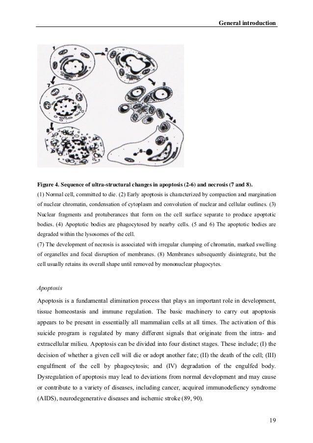 Dissertation 2004