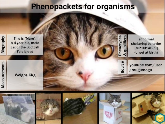 Phenopackets for Patients Image credits: ngly1.org • Dry eyes • Developmental delay • Elevated liver function phenotype_pr...