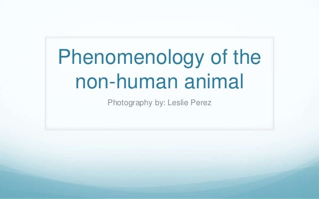 Phenomenology of the non-human animal    Photography by: Leslie Perez