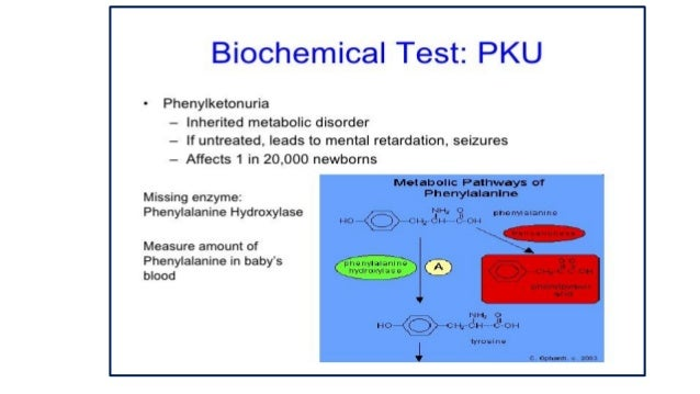 a description of the phenylketonuria pku disease and its spread On the scent: the discovery of pku dr asbjørn følling, in a colorado cabin laboratory følling was the first to identify the disease today known as phenylketonuria.