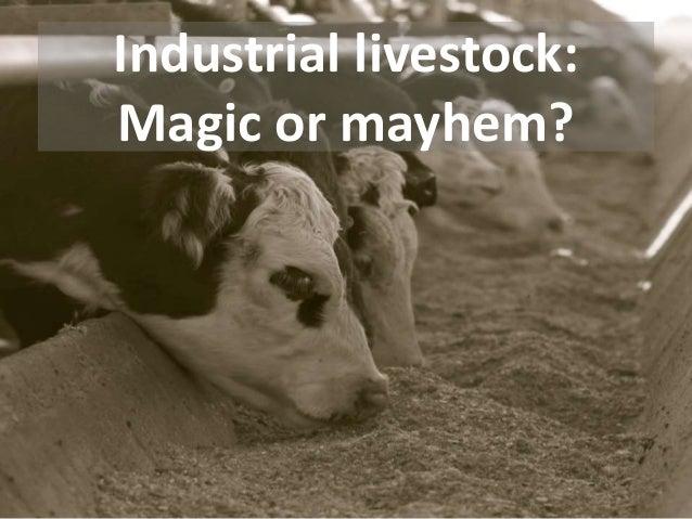Industrial livestock: Magic or mayhem?
