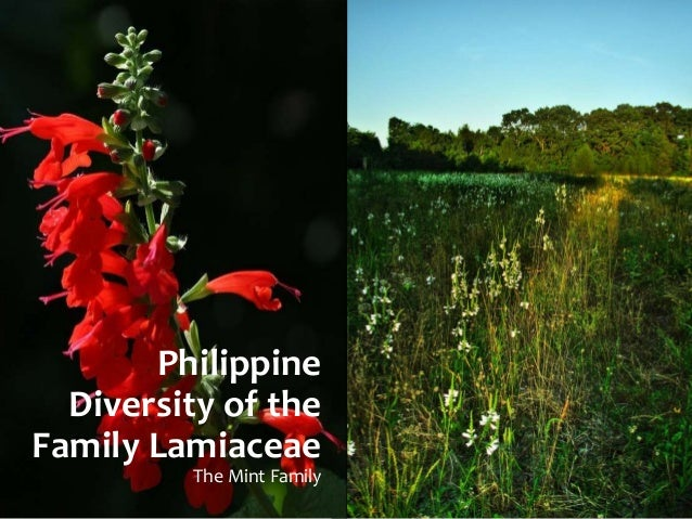 Philippine  Diversity of the  Family Lamiaceae  The Mint Family