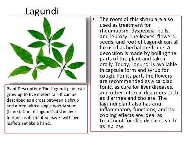 info of lagundi tea