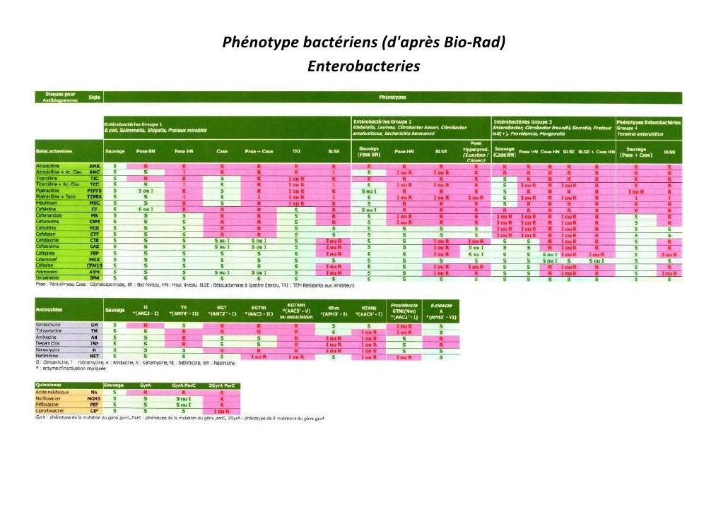 Phénotype bactériens (d'après Bio-Rad)           Enterobacteries