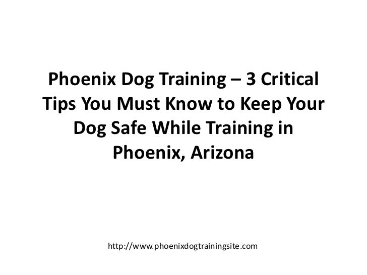 Phoenix Dog Training – 3 Critical Tips You Must Know to Keep Your Dog Safe While Training in Phoenix, Arizona<br />