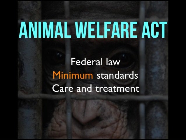 an examination of the federal animal welfare act Current animal welfare laws the following links will provide you with information on animal welfare related laws federal laws animal welfare act (awa.