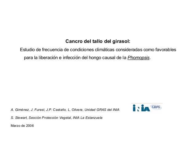 Cancro del tallo del girasol: Estudio de frecuencia de condiciones climáticas consideradas como favorables para la liberac...