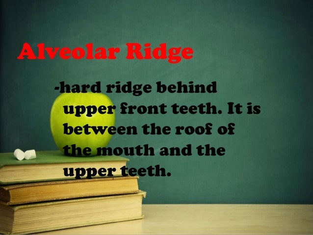 Alveolar Ridge