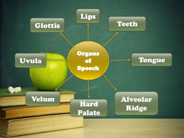 organs of speech in phonetics ppt