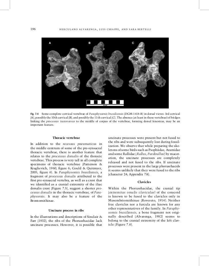196                     HERCULANO ALVARENGA, LUIS CHIAPPE, AND SARA BERTELLIFig. 7.4 Some complete cervical vertebrae of P...