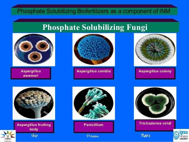 Analysis of phosphate solubilizing bacteria in soil