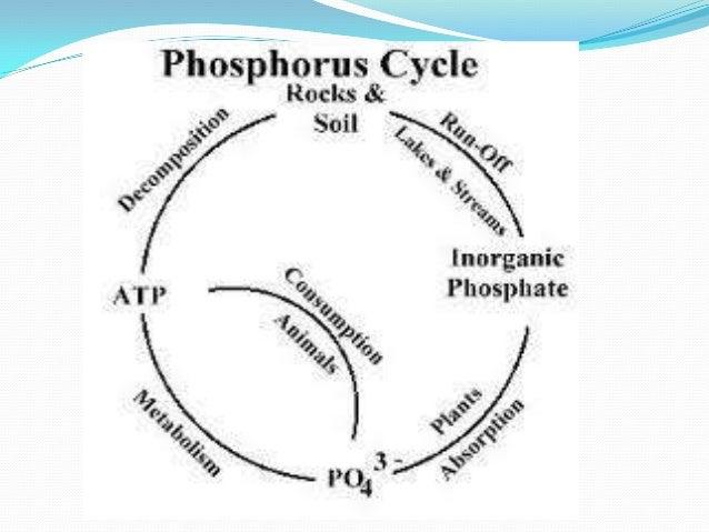 phosphorous cycle Simple Water Cycle Diagram