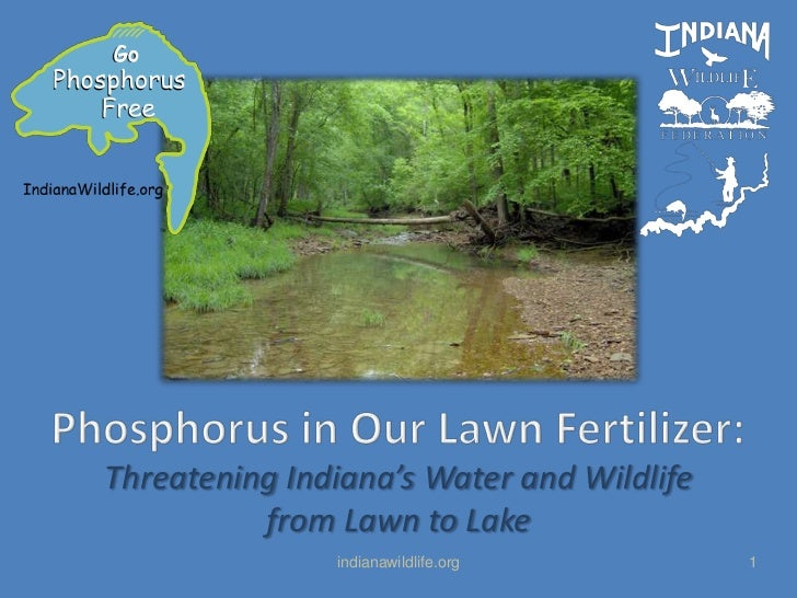 Phosphorus in Our Lawn Fertilizer:<br />Threatening Indiana's Water and Wildlife from Lawn to Lake<br />indianawildlife.or...