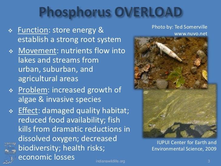 Phosphorus In Our Lawn Fertilizer Threatening Indiana S