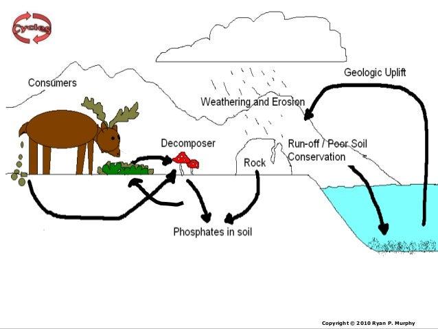 Phosphorus Cycle Lesson PowerPoint Cycles Biogeochemical Cycles Ec