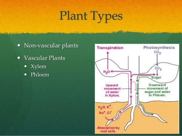 Photo Cr With Plant Anatomy
