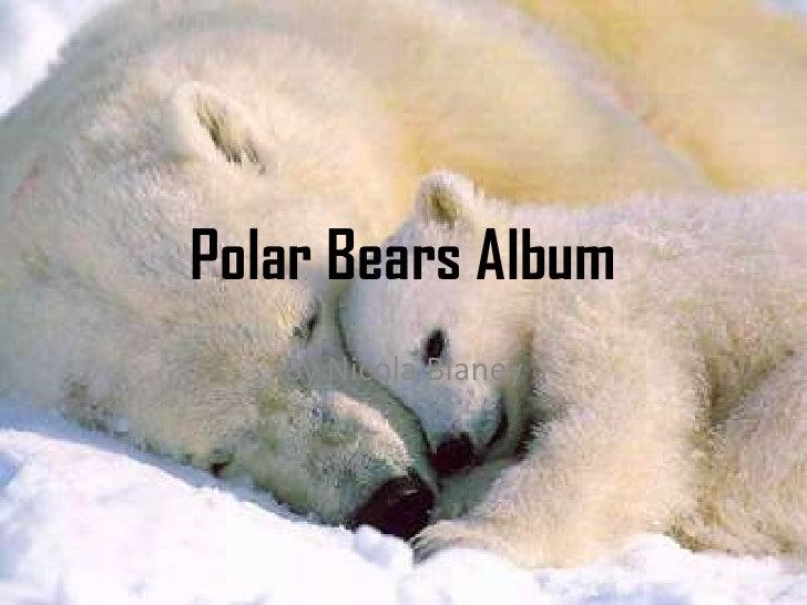 Polar Bears Album   By Nicola Blaney