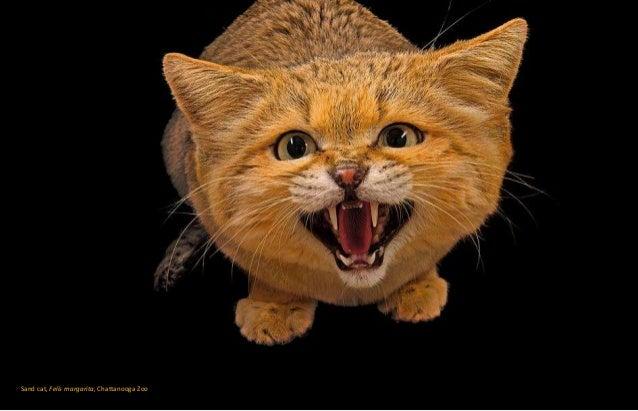 Joel S Cat