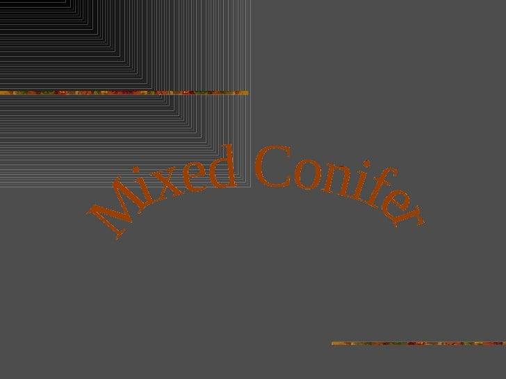 Mixed Conifer