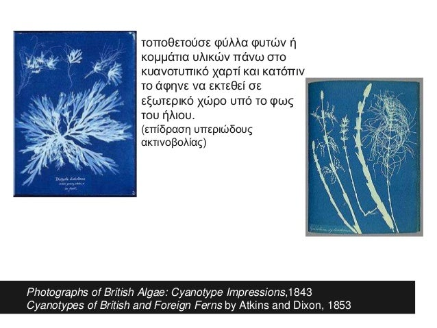 Photographs of British Algae: Cyanotype Impressions,1843 Cyanotypes of British and Foreign Ferns by Atkins and Dixon, 1853...