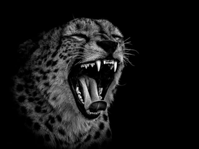 Photographer Ed Hetherington Black And White Animal Portraits This Series Of Pictures By