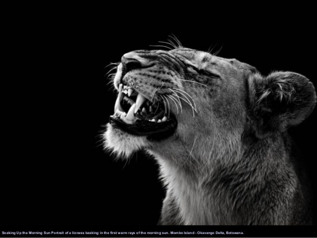 Famous Black And White Animal Photography