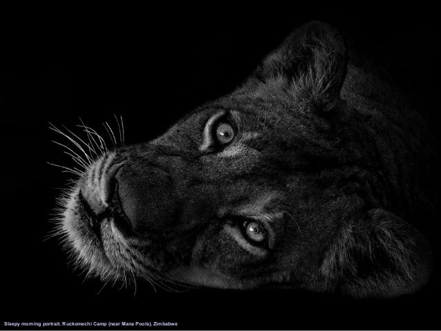 30 end cast photographer ed hetherington black and white animal portraits