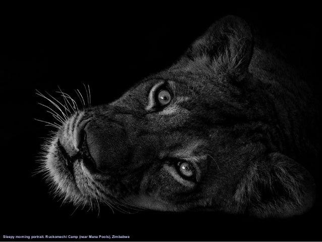 30 End Cast Photographer Ed Hetherington Black And White Animal