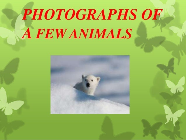 PHOTOGRAPHS OF A FEW ANIMALS
