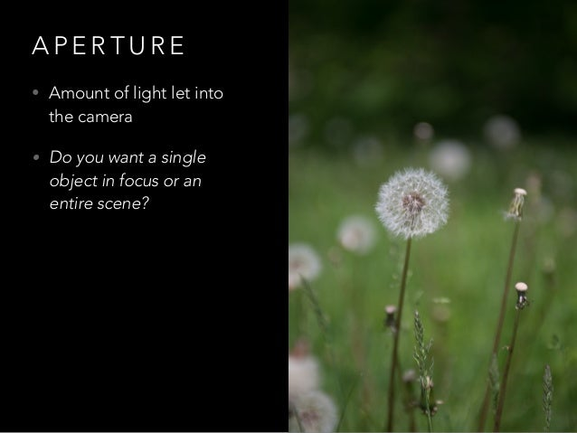 A P E R T U R E • Amount of light let into the camera • Do you want a single object in focus or an entire scene?