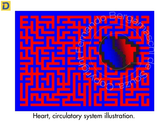 Heart, circulatory system illustration.
