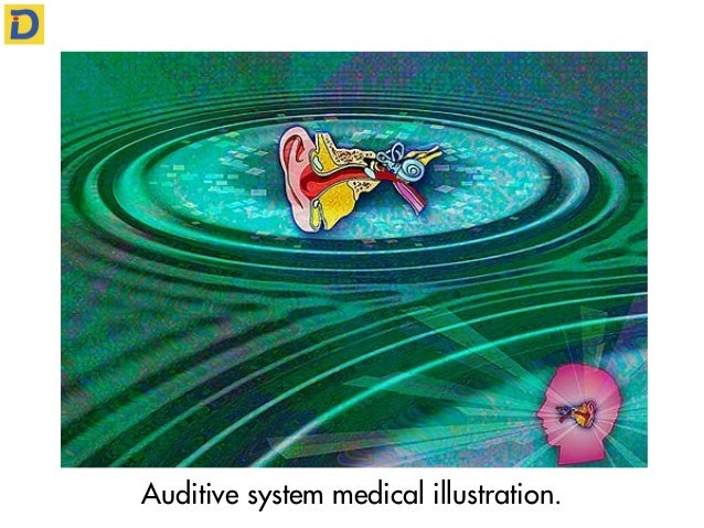 Auditive system medical illustration.