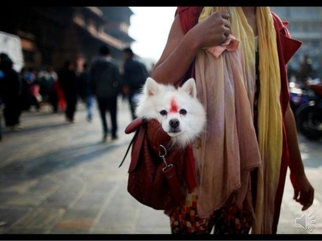 Photojournalist Niranjan Shrestha