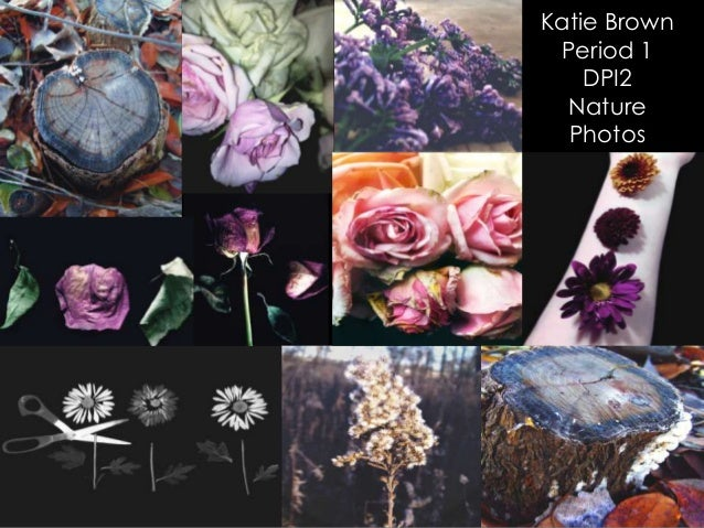 Katie Brown Period 1 DPI2 Nature Photos